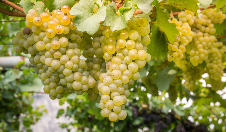 Traveler's Guide to Different Types of Sparkling Wine | DoTravel