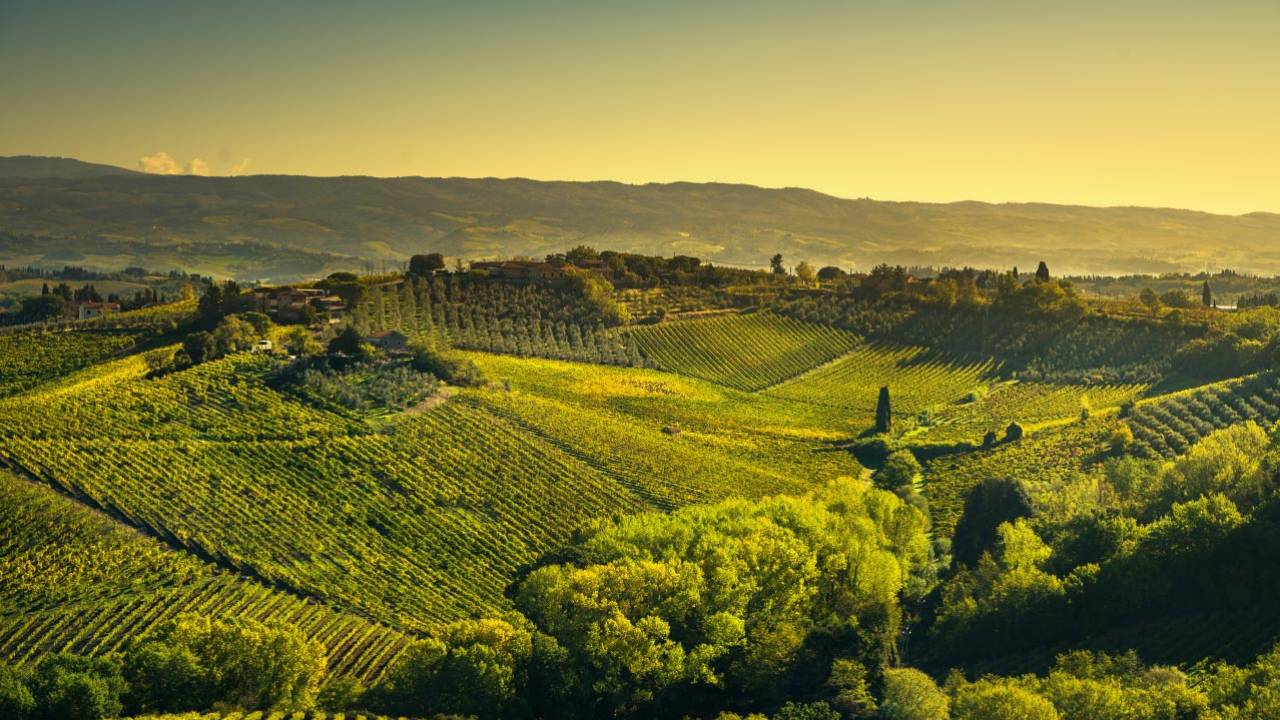 Book Florence Wine Tours with Tuscany Road Trip   DoTravel