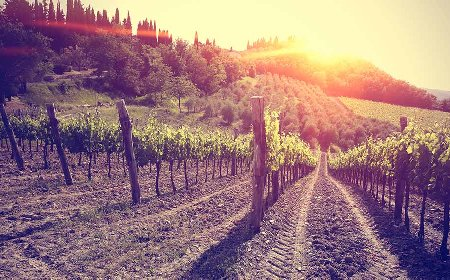 Tuscany vespa tours to visit chianti wineyards