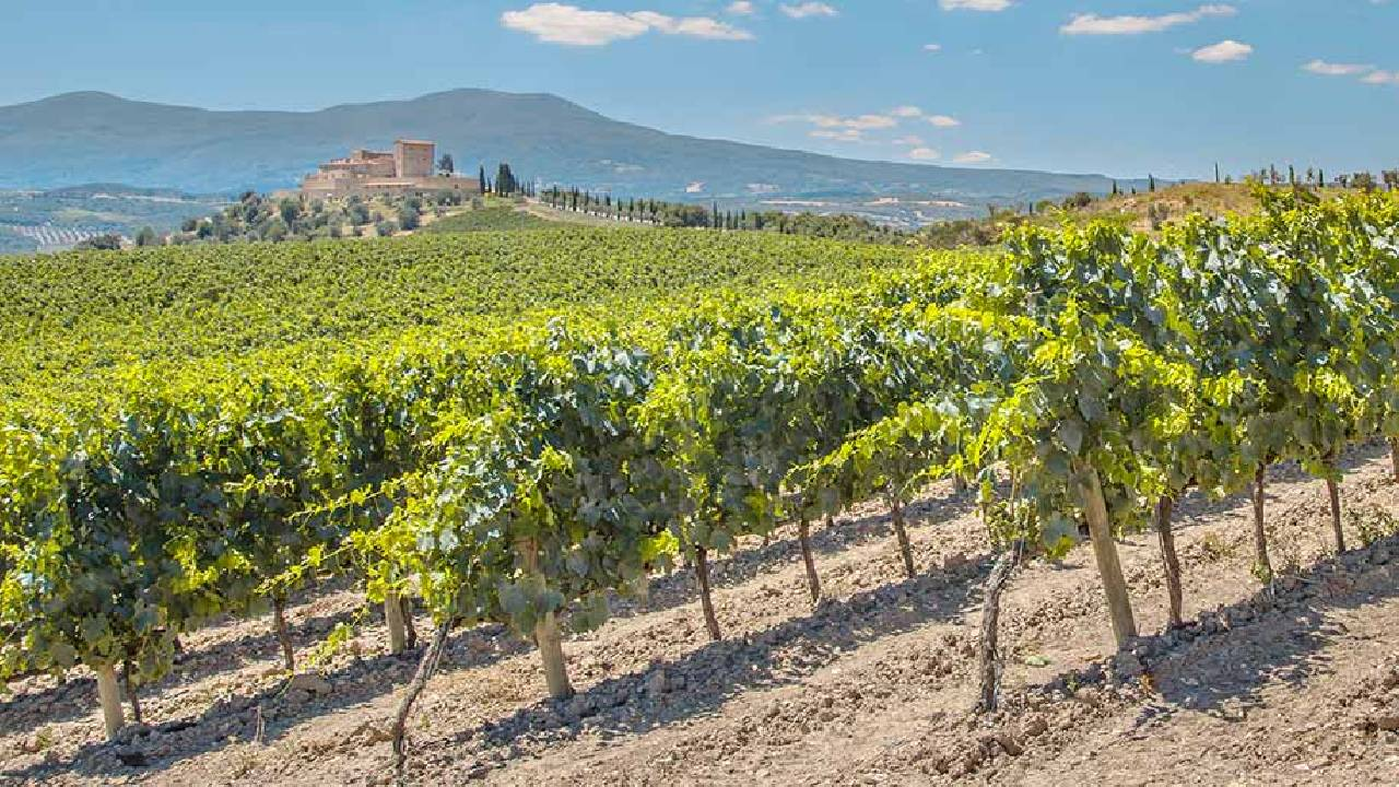 chianti tour from siena with expert guide