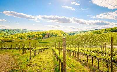 chianti tour from siena for sightseeing